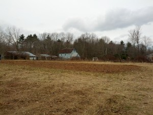 The Farm House And Garlic Mulched In,